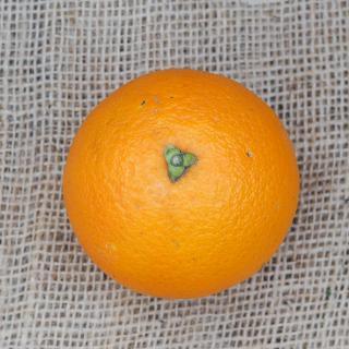 Orange WASHINGTON