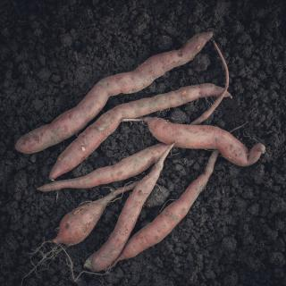 Süßkartoffel II.Wahl