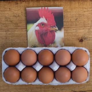 Eier 10 Stück GRÖSSE S Bruderhahn