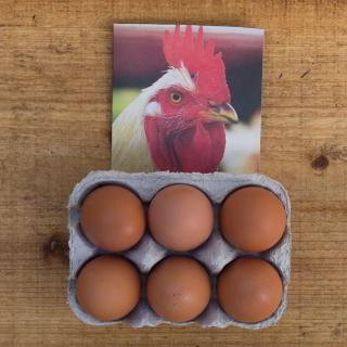 Eier 6 Stück GRÖSSE XL Bruderhahn
